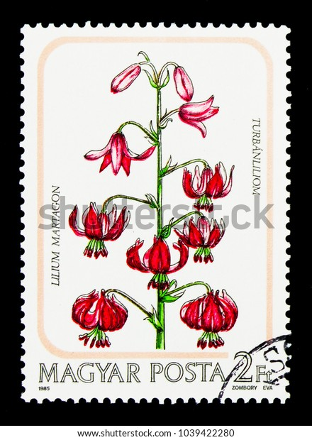 MOSCOW, RUSSIA - NOVEMBER 26, 2017: A stamp printed in Hungary shows Lilium martagon, Flowers serie, circa 1985
