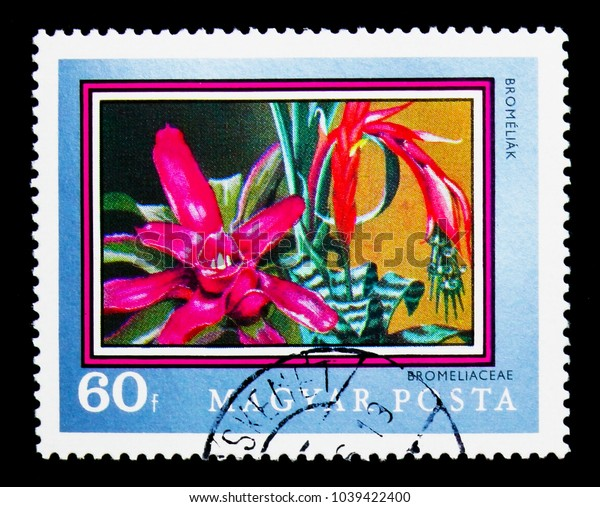 MOSCOW, RUSSIA - NOVEMBER 26, 2017: A stamp printed in Hungary shows Bromeliad (Bromeliaceae), 200th anniversary of the Botanical Garden of the University of Buda serie, circa 1971
