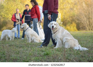 Moscow, Russia - October 14, 2018: Retriever with the owner in the Park