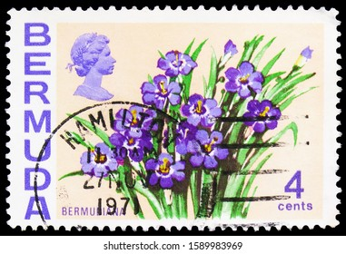 MOSCOW, RUSSIA - OCTOBER 4, 2019: Postage stamp printed in Bermuda shows Bermudiana, Flowers serie, circa 1970