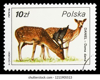 MOSCOW, RUSSIA - SEPTEMBER 15, 2018: A stamp printed in Poland shows Fallow Deer (Dama dama), Wildlife serie, circa 1986