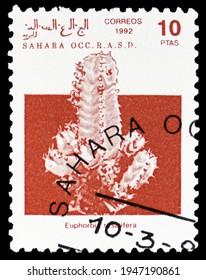MOSCOW, RUSSIA - SEPTEMBER 16, 2020: Postage stamp printed in Cinderellas shows Resin spurge (Euphorbia resinifera), Sahara Occ. serie, circa 1992