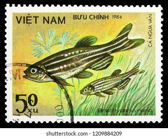 MOSCOW, RUSSIA - SEPTEMBER 26, 2018: A stamp printed in Vietnam shows Zebrafish (Brachydanio rerio), Fish - Ornamental serie, circa 1984