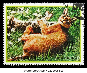 MOSCOW, RUSSIA - SEPTEMBER 26, 2018: A stamp printed in Korea shows Carakal (Caracal caracal), Animals serie, circa 1984
