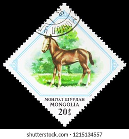 MOSCOW, RUSSIA - SEPTEMBER 26, 2018: A stamp printed in Mongolia shows Colt (Equus ferus caballus), Young animals serie, circa 1982