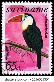 MOSCOW, RUSSIA - SEPTEMBER 27, 2019: Postage stamp printed in Suriname shows White-throated Toucan (Ramphastos tucanus), Free stamps Birds serie, circa 1977