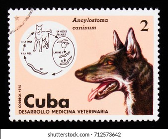 MOSCOW, RUSSIA - SEPTEMBER 3, 2017: A stamp printed in Cuba shows Hookworm (Ancylostoma caninum), Dog (Canis lupus familiaris), Veterinary Medicine serie, circa 1975