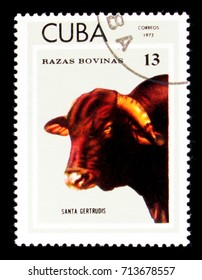 MOSCOW, RUSSIA - SEPTEMBER 3, 2017: A stamp printed in Cuba shows Santa Gertrudis (Bos primigenius taurus), Breeds of cattle serie, circa 1973
