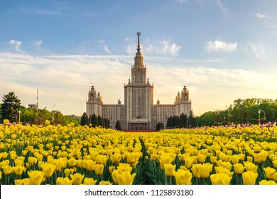 Moscow Russia, spring tulip flowers at Lomonosov Moscow State University