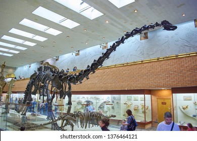 Moscow, Russia, Yu.A. Orlov Paleontological Museum, March 22, 2017, side view of a brachiosaurus skeleton