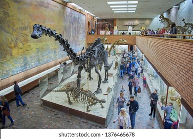 Moscow, Russia, Yu.A. Orlov Paleontological Museum, March 22, 2017, the brachiosaurus skeleton in front
