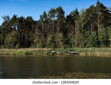 Moscow summer in Skolkovo