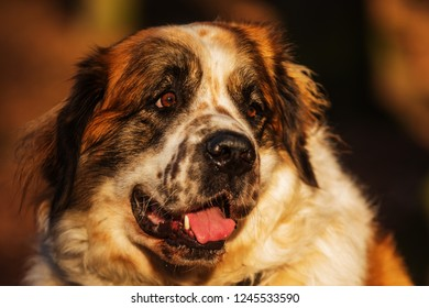 Moscow watchdog nice portrait