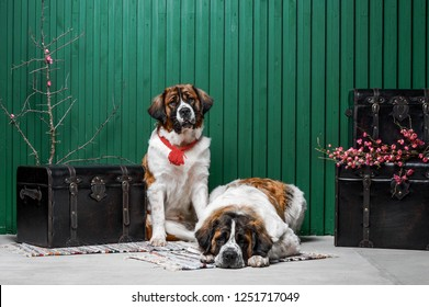 Moscow watchdogs puppies sitting in the studio with green wall near suitcases with flowers