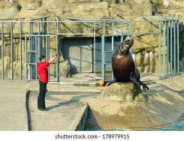 MOSCOW,RUSSIA-FEBRUARY 26,2014:Moscow Zoo is 21.5-hectare zoo founded in 1864 in Russia. Steller sea lion also known as northern sea lion and Steller's sea lion,is near threatened species of sea lion