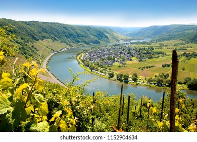 Mosel river with viticulture, Rhineland-Palatinate, Germany