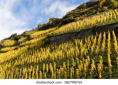 Moselle landscape and vineyards in golden autumn colors, travel and holiday destination in Germany.