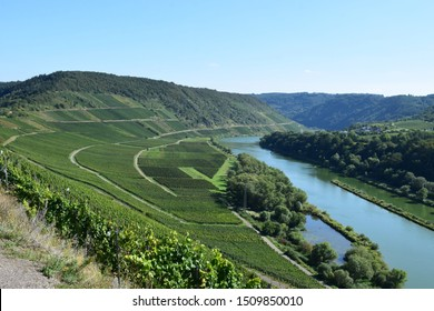Moselle valley with steep vineyards, near 'Zell an der Mosel'