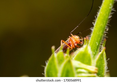 A mosquito crawling up a plant