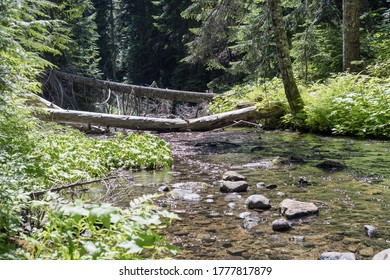 Mosquito Creek in Gifford Pinchot National Forest, Washington State