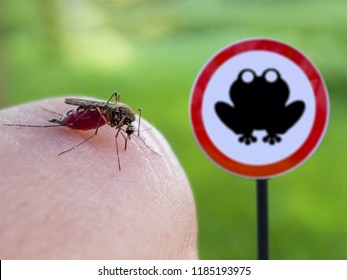 mosquito drinking blood from human skin on the background of dangerous frog sign