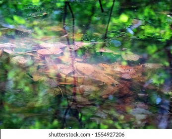 Mosquito larvae (bloodworm, Chironomidae) float to surface of stagnant pond to breathe, inhabitants of waters, hydrobionts and valuable food for fish and birds, but the Lord's punishment for people