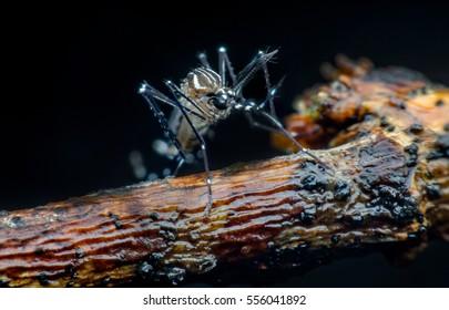 mosquito, malaria, influenza