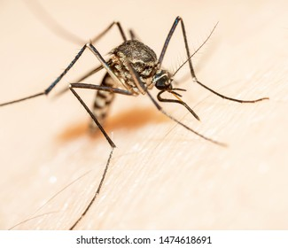 Mosquito the most dangerous insect make dangue fever cause problem to die people around the world.