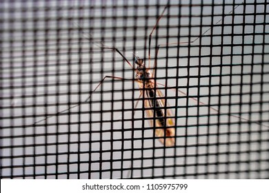 Mosquito on the grid