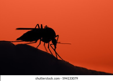 mosquito on the human skin at sunset