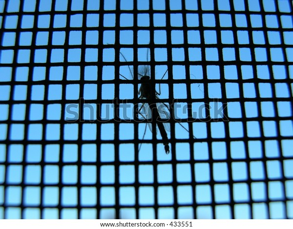 mosquito on a screen