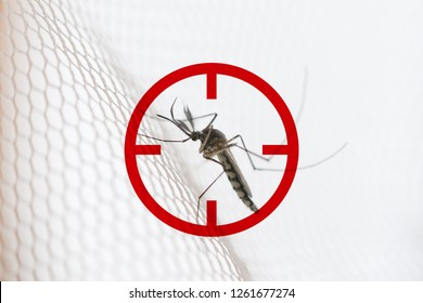 Mosquito on white mosquito wire mesh,net.Mosquito disease is carrier of Malaria, Zica Virus,Fever.