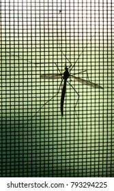 Mosquito on window screen, closeup. Selective focus.