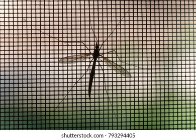 Mosquito on window screen, closeup.Selective focus.