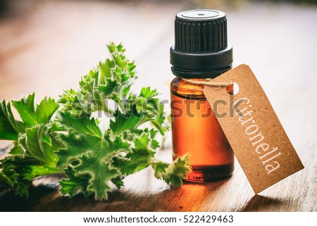 Mosquito repellent. Citronella essential oil and fresh leaves on wooden background. Tag with citronella text