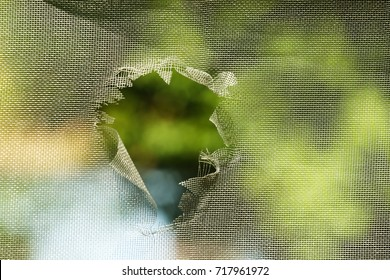 Mosquito screen with hole, close up