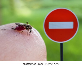 Mosquito sucks blood from human finger on the background of the sign entry is prohibited.