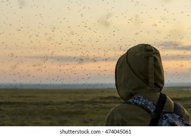Mosquitoes, Yamal, Russia