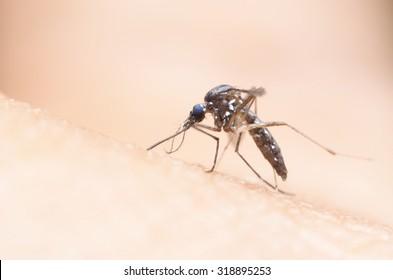 mosquito,malaria