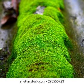 moss - Shutterstock ID 293555723