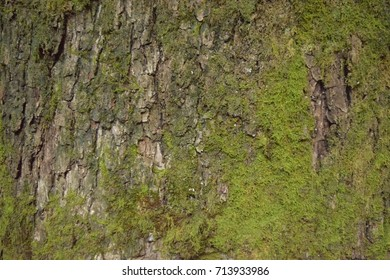 Moss or algae on the tree