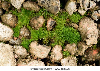 Moss among slag stones and old bricks near a river. Nature background. Closeup. Selective focus