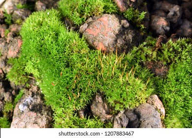 Moss among slag stones and old bricks near a river. Selective focus