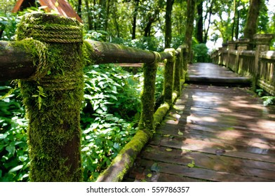 Moss around the wooden walkway in rain forest - Chiang Mai