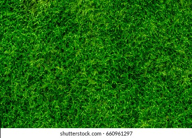 Moss Background Texture