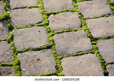 Moss (Bryophyta): vivid green moss growing between the joints of gray concrete cobbles