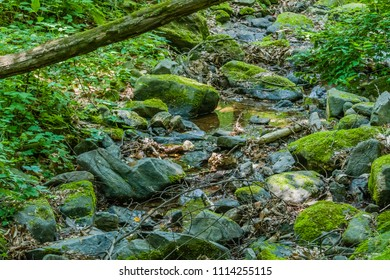 Moss covered boulders and rocks in small sallow stream in mountainous forest with lush green vegetation.