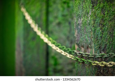 Moss covered chain and wall in the old wharf