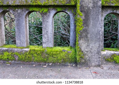 Moss Covered Concrete Bridge in Ross Valley