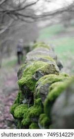 Moss covered dry stone wall in the Yorkshire Dales